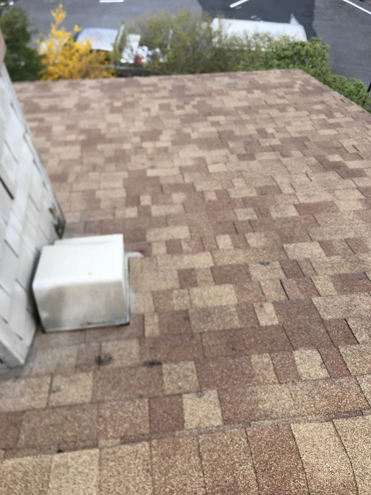 shingles after cleaning