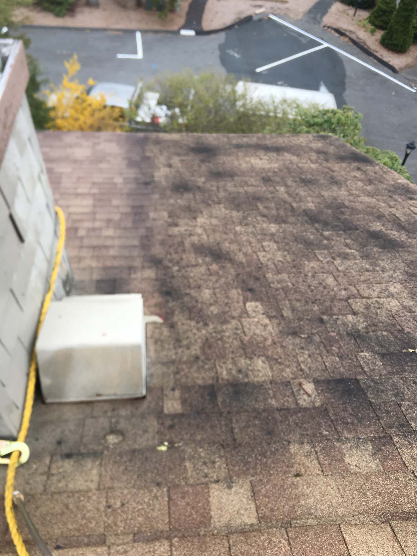shingles before cleaning